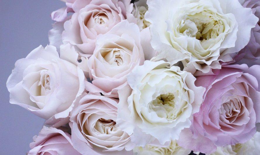 Quelques modèles de roses éternelles sous cloche