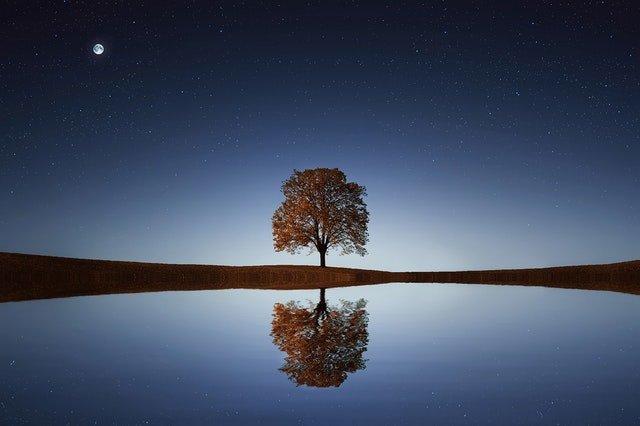 Pourquoi opter pour un tableau arbre de vie pour votre décoration ?
